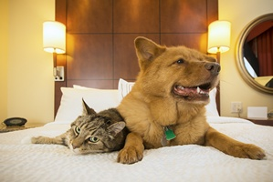 Na urlop ze zwierzakiem: gdzie naj�atwiej znale�� zakwaterowanie [© Michael Pettigrew - Fotolia.com]