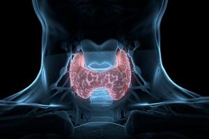 Nadczynność tarczycy ma związek z wyÅźszym ryzykiem przedwczesnej śmierci [Fot. Anatomy Insider - Fotolia.com]