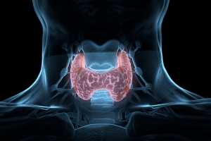 Nadczynność tarczycy ma związek z wyższym ryzykiem przedwczesnej śmierci [Fot. Anatomy Insider - Fotolia.com]