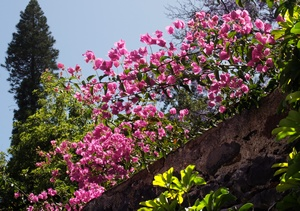 Najpiękniejsze europejskie ogrody botaniczne [© hufnasi - Fotolia.com]