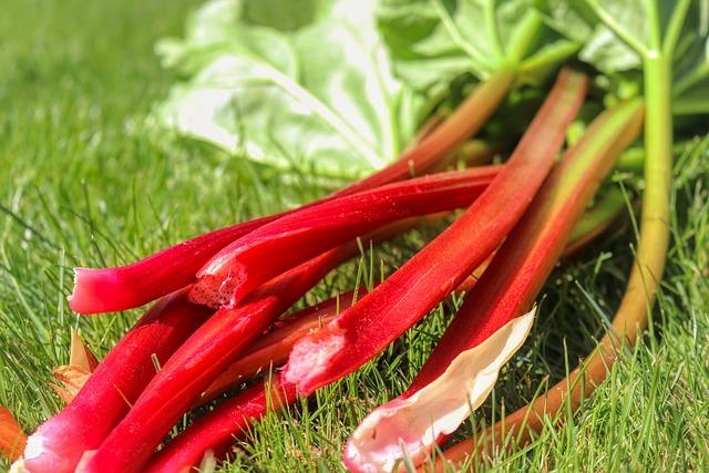 Natura w słuÅźbie zdrowiu - rabarbar na problemy Åźołądkowe i podwyÅźszony cholesterol [fot. Alex Fox from Pixabay]