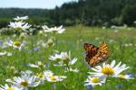 Nie daj się wiosennej depresji [© Marek Mierzejewski - Fotolia.com]