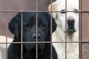 Nie pozwól mu zaginąć. Zadbaj bezpieczeństwo swojego zwierzaka [© Reddogs - Fotolia.com]