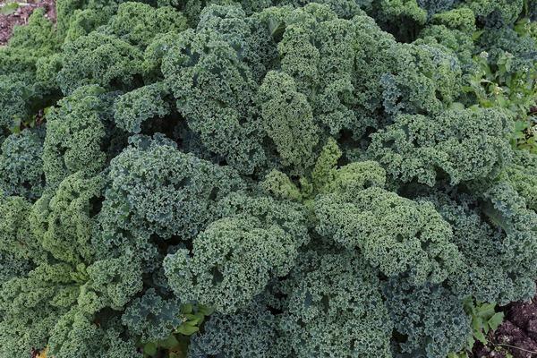 Nielakoholowe stłuszczenie wątroby - pomocny naturalny związek z roślin [fot. birgl Pixabay]