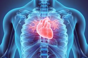 Niewydolność serca – pacjentom pomaga jedzenie większych ilości białka [Fot. yodiyim - Fotolia.com]