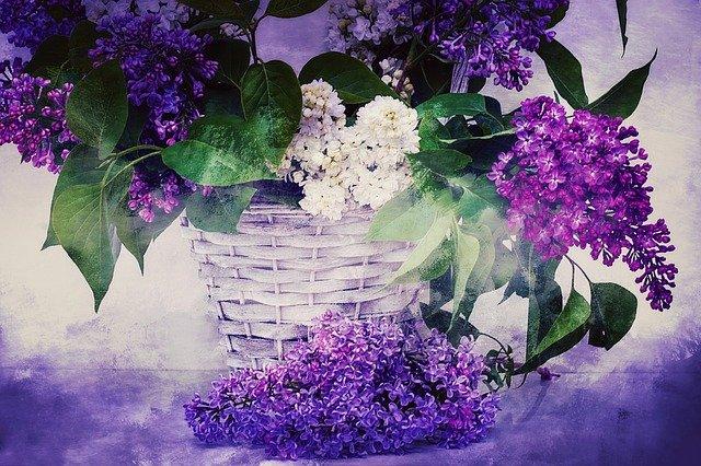 Niezdolność do rozpoznania zapachu np. cytryny czy bzu oznacza zagrożenie Alzheimerem [fot. pixabay.com]