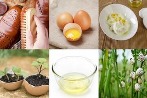 Niezwykłe zastosowania jaj [fot. collage Senior.pl]