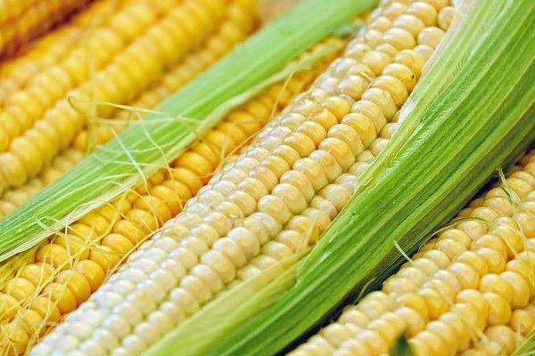 Niezwykłe zastosowania kukurydzy [fot. Couleur from Pixabay]