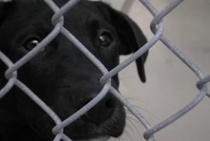 Nowa Ustawa o ochronie zwierząt wprowadzi obowiązek czipowania? [© Michelle Griffis - Fotolia.com]