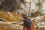 Odkleszczowe zapalenie mózgu: uwaga na kleszcze jesienią [© staphy - Fotolia.com]