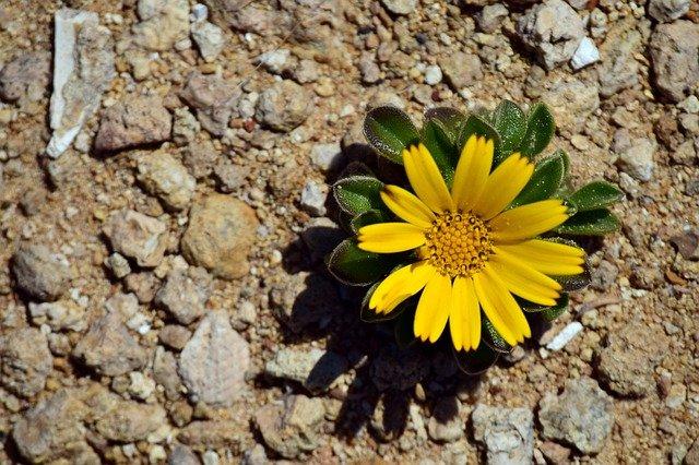 Odporność psychiczna pomaga w trudnych sytuacjach - jak ją pielęgnować [fot. Ulrike Leone from Pixabay]