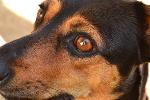 Odpowiednia dieta poprawia pamięć psich seniorów [© anikic - Fotolia.com]