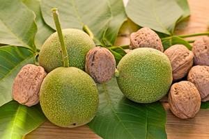 Orzechy włoskie: zdrowie i smak [© blina - Fotolia.com]