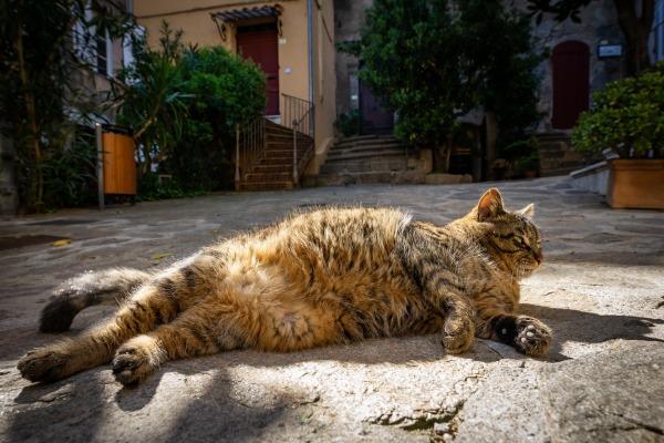 Otyły pies lub kot - zobacz, jak to osłabia jego zdrowie [Fot. Olivier Tabary - Fotolia.com]
