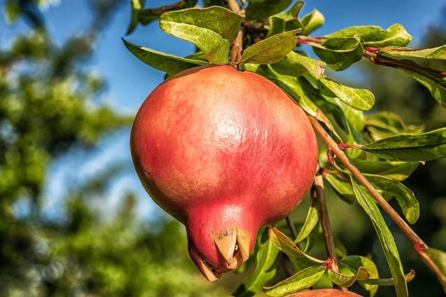 Owoce granatu mają moc anti-aging [fot. Peter H from Pixabay]