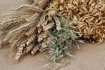 Pełnoziarniste zboża - samo zdrowie [© petrabarz - Fotolia.com]