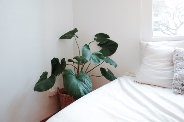 Pięć roślin, które możesz uprawiać w sypialni i które wspomagają zdrowie [Fot. nopparats - Fotolia.com]