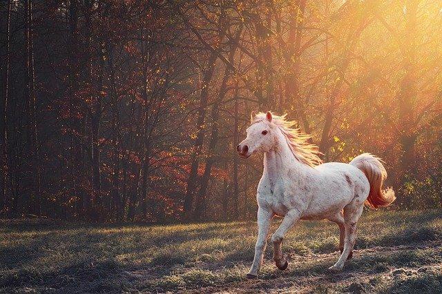 Piękno jest prostsze niż zwykle się sądzi? [fot. ELG21 from Pixabay]