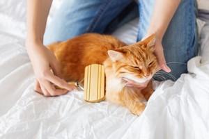 Pielęgnacja kotów [© Konstantin Aksenov - Fotolia.com]