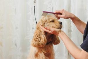 Pielęgnacja psa [© o_lypa - Fotolia.com]