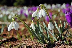 Pierwszy dzień wiosny [© Oleksandr Kotenko - Fotolia.com]