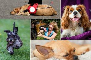 Pies dla seniora - jaka rasa najlepsza? [fot. collage Senior.pl]