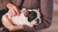 Pies w domu dobrze wpływa na zdrowie