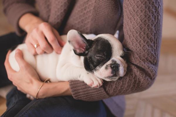 Pies w domu dobrze wpływa na zdrowie [fot. Pexels z Pixabay]