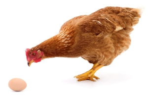 """Pisanki? Tak, ale nie z jajek """"trójek"""" [Fot. olhastock - Fotolia.com]"""