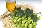 Piwo piwu nierówne: jak powstaje złoty napój [© Václav Mach - Fotolia.com]