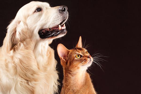 Po stracie psa lub kota też odczuwamy żałobę [Fot. tania_wild - Fotolia.com]
