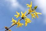 Pogoda na Wielkanoc: chłodno i deszczowo [© barneyboogles - Fotolia.com]
