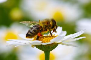Pomóż pszczołom jeszcze jesienią [Fot. Alekss - Fotolia.com]