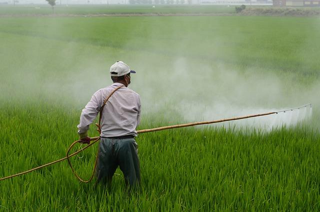 Popularny pestycyd odpowiedzialny za otyłość? [fot. zefe wu from Pixabay]