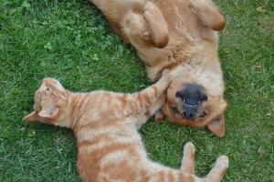 """Posiadanie zwierzaka może być """"lekiem"""" na depresję? [Fot. terezqua - Fotolia.com]"""