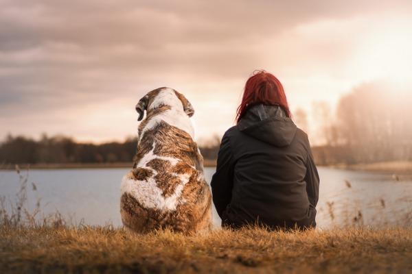 Posiadanie zwierzaka pomaga przetrwać żałobę po współmałżonku [fot.  Sven Lachmann z Pixabay]