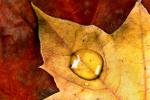 Powstrzymaj jesienną chandrę [© Anyka - Fotolia.com]
