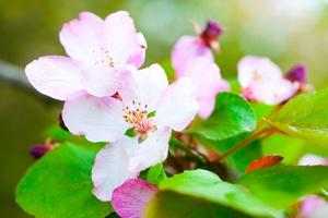 Późna wiosna dobra dla alergików [© mashe - Fotolia.com]