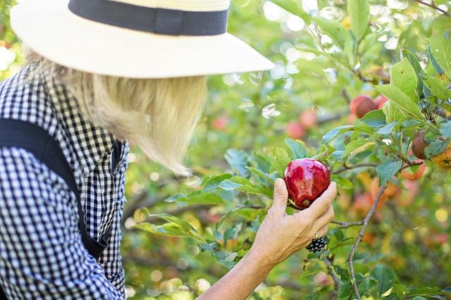 Praca na zewnątrz chroni przed rakiem piersi  [fot. Jill Wellington from Pixabay]