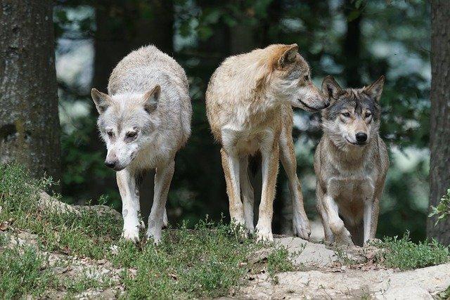 Przyjaźń i wrogość to ewolucyjne strategie [fot. Marcel Langthim from Pixabay]