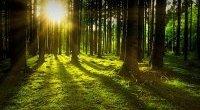 Przyroda ma dobroczynny wpływ na psychikę. Wystarczą 2 godziny w tygodniu