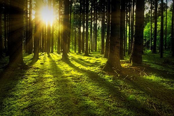 Przyroda ma dobroczynny wpływ na psychikę. Wystarczą 2 godziny w tygodniu [fot. Johannes Plenio z Pixabay]