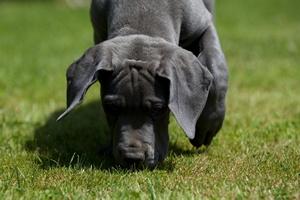 Rak jajników może być wykryty przez psy. Rozpoczęto szkolenia czworonogów [© CallallooFred - Fotolia.com]