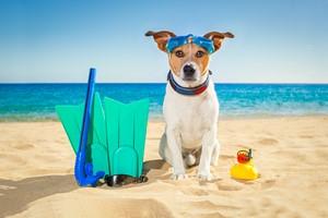 Razem czy osobno? Jak zaplanować urlop ze zwierzakiem? [© javier brosch - Fotolia.com]