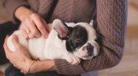 Relacja między człowiekiem i psem jak między rodzicami i dziećmi