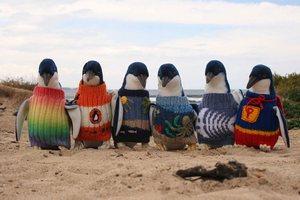 Robienie sweterków dla pingwinów - hobby najstarszego Australijczyka [fot. http://penguinfoundation.org.au]