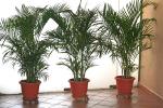 Rośliny doniczkowe zimą [Š Kheng Guan Toh - Fotolia.com]