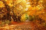 Rozkwitnij na przekór jesieni! [© Kochergin - Fotolia.com]