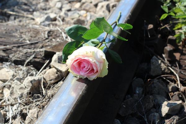 Samobójstwa - co kilkadziesiąt sekund ktoś odbiera sobie życie [fot. Goran Horvat z Pixabay]