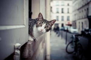Schizofrenia a posiadanie kota - uczeni znaleźli powiązanie [© shocky - Fotolia.com]